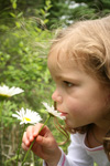 A girl smelling daisies